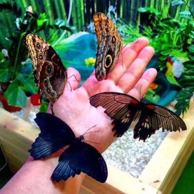 Парк бабочек в Юркин парке